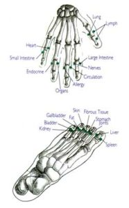hand and foot meridians